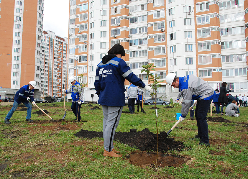 Moscow Coke and Gas Plant Plants Trees in Vidnoye